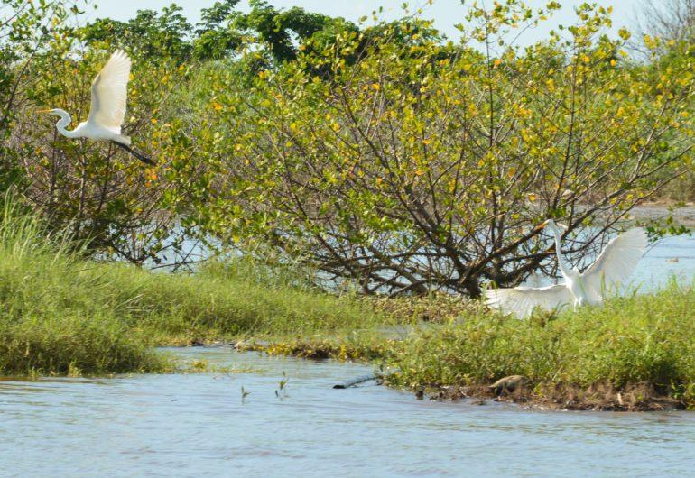 Go For Cruise Costa Rica Azamara Club Cruises vogels