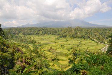 Go For Cruise Azie Indonesie Bali rijstvelden