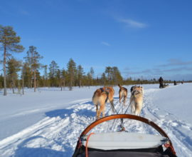 Go For Cruise Go For Lapland husky